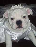 dog wedding dress, dog bridal gown